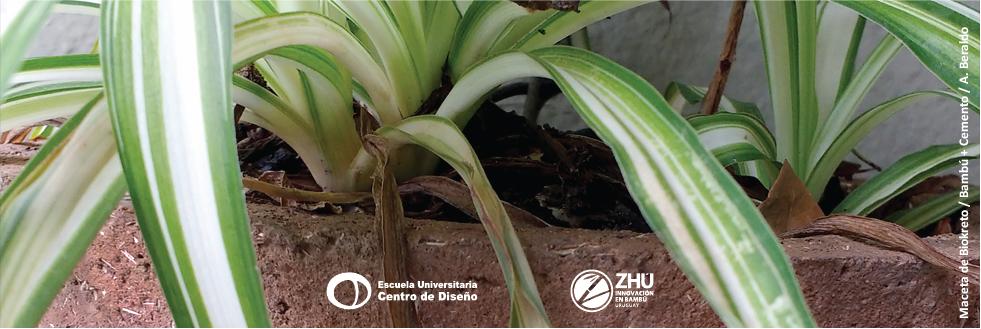 Bambú: características y oportunidades de materiales no convencionales para distintos usos