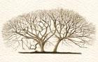 PEDRO CRACCO Anatomía artística de los vegetales Museo Juan Manuel Blanes Museo Casa Vilamajó: ___ OCT 03 – DIC 14 de 2014 ………………………………….